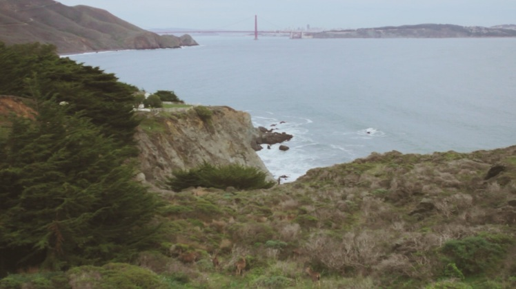 The Golden Gate in the background while nature is in the foreground with some deer.